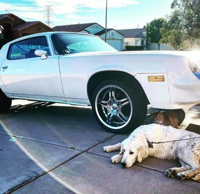 1979 Chevrolet Camaro Coupe for sale 101390689
