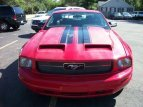 2006 Ford Mustang for sale 101589529