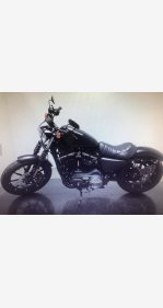 2019 Harley-Davidson Sportster for sale 200775302