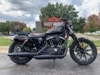 2019 Harley-Davidson Sportster Iron 883 for sale 200813390