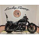 2019 Harley-Davidson Sportster for sale 201008009