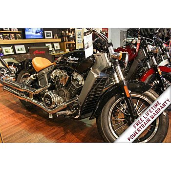 2019 Indian Scout for sale 200683915