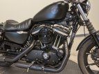 2021 Harley-Davidson Sportster Iron 883 for sale 201141286