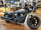 2021 Indian Scout for sale 201081827