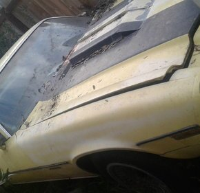 1976 Chevrolet Camaro LT Coupe for sale 100955636