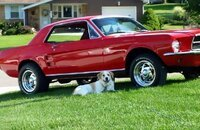 1967 Ford Mustang Coupe for sale 101134419