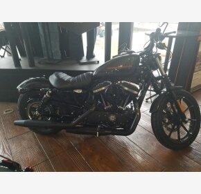 2019 Harley-Davidson Sportster for sale 200692065
