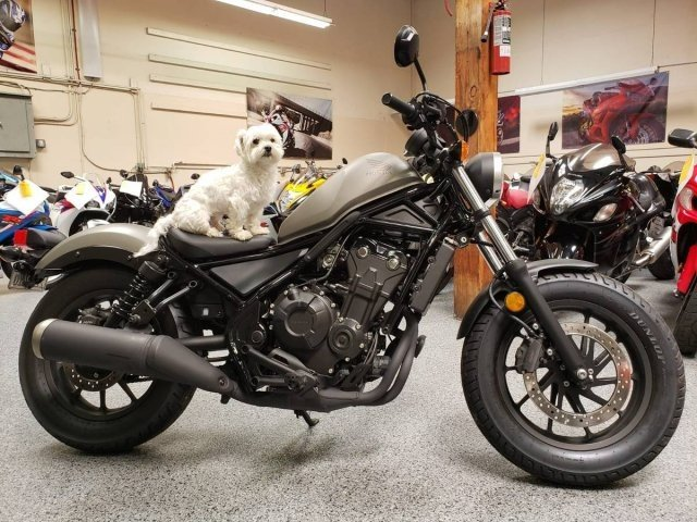 Motorcycle Dealers Near My Location >> 2017 Honda Rebel 500 Motorcycles for Sale - Motorcycles on Autotrader